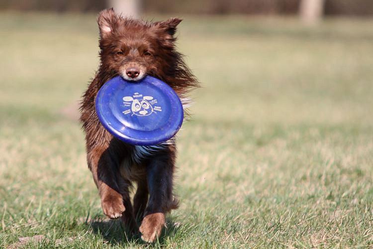 george-frisbee1.jpg