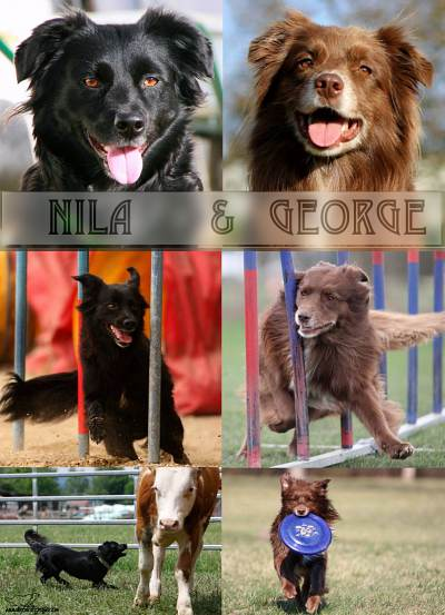 2015: Nila x George