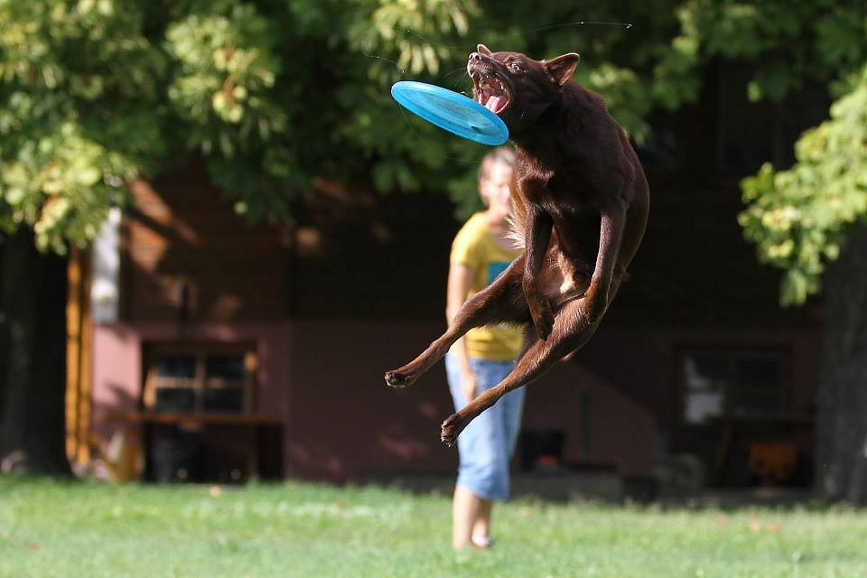 frisbee1.jpg